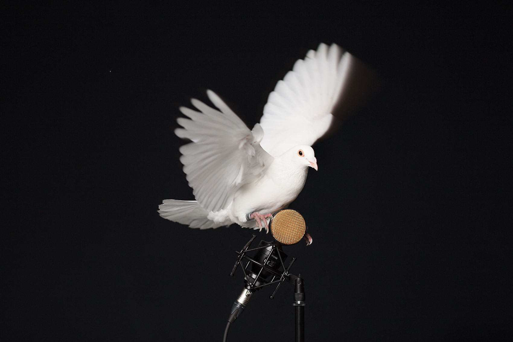 3-Taube-Eilichmann-HP